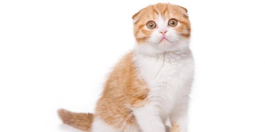 Nos amis les chats sont, eux aussi, sensibles au stress