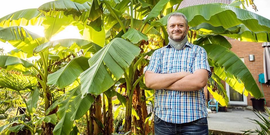 Les premières bananes belges sont boussutoises ! - La DH