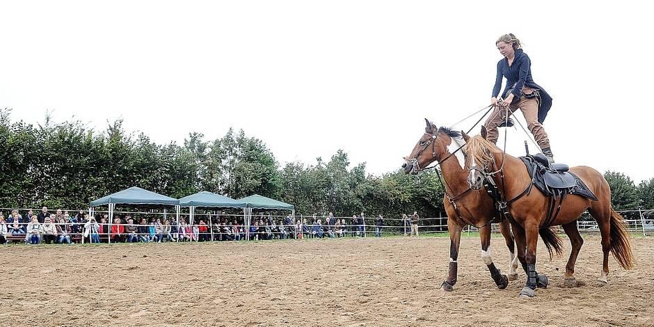 Des chevaux mutilés à la hache à Héron