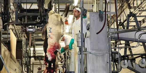 Fête du sacrifice: comment le boycott saigne les éleveurs wallons - La DH
