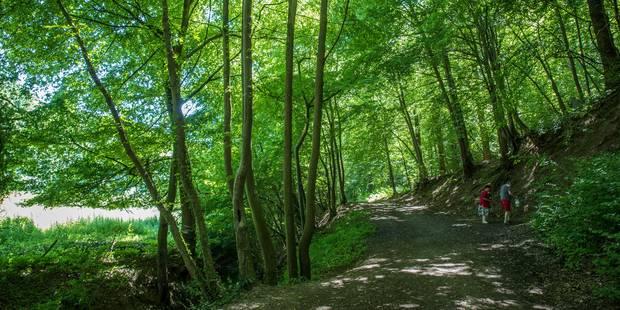 Agenouillés et menacés de mort dans un bois de Seneffe - La DH