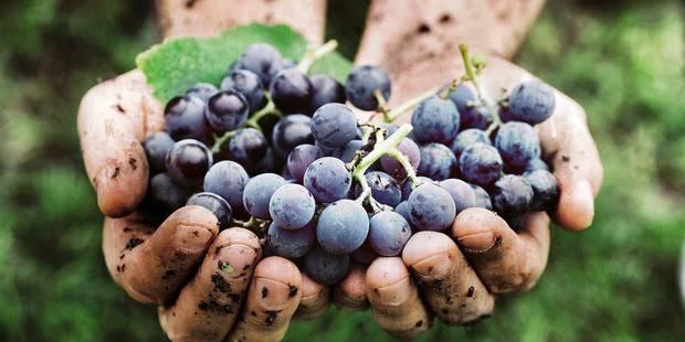 Le vin nature, c'est tendance - La DH