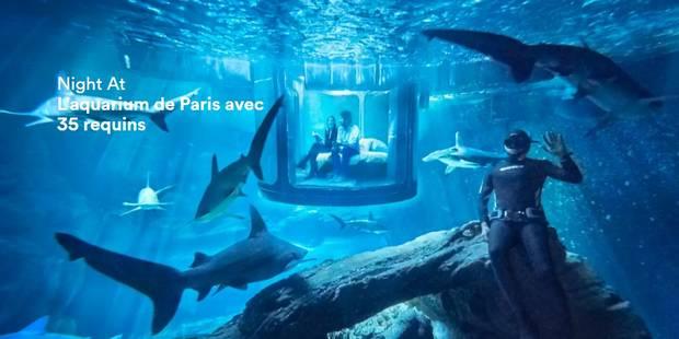 Une nuit au milieu des requins à Paris: l'offre insolite d'Airbnb - La DH