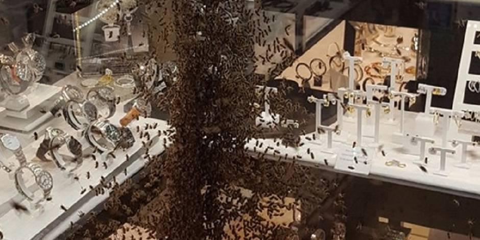 Près de 15 000 abeilles à l'assaut d'une bijouterie (VIDEO)