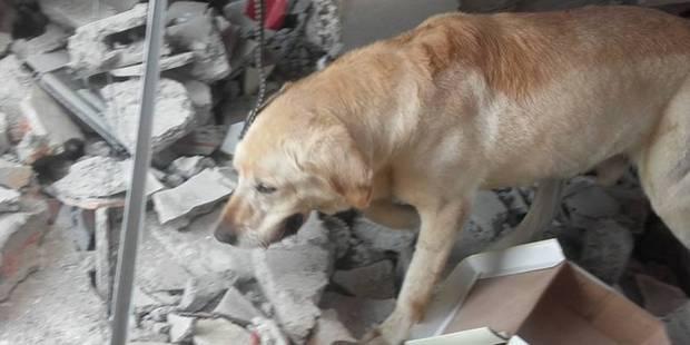 Dayko meurt épuisé après avoir sauvé la vie de 7 personnes - La DH