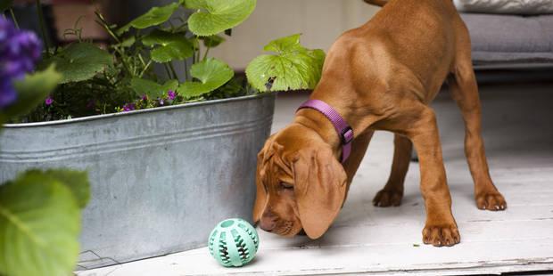 Ils laissent leur chien mourir de faim: une amende et une peine de travail - La DH