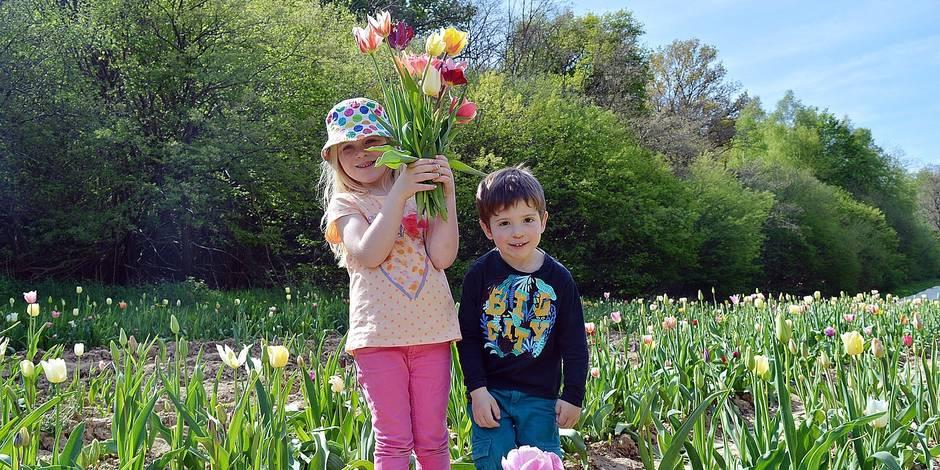 Fleurs à couper : la bonne idée pour la fête des mères