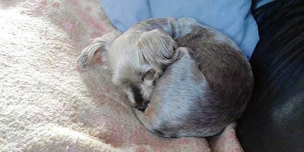 Le serial killer d'animaux a encore frapp�: un nouveau chien tortur�