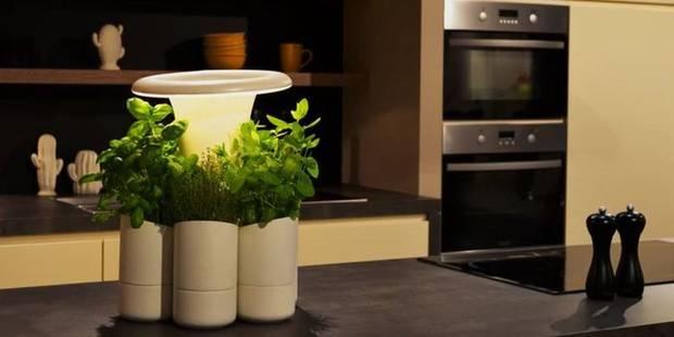 La belle idée pour que les herbes et plantes aromatiques ne meurent plus jamais - La DH