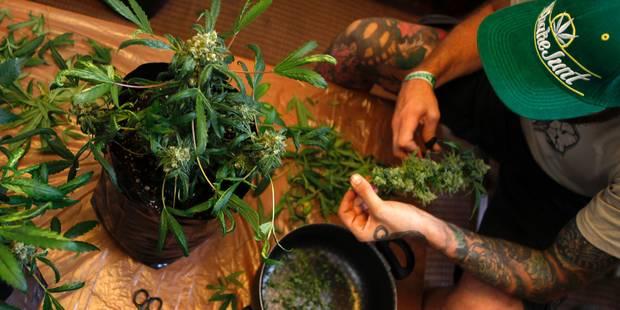 Cinquante plants et 100gr de cannabis découverts à Mouscron - La DH