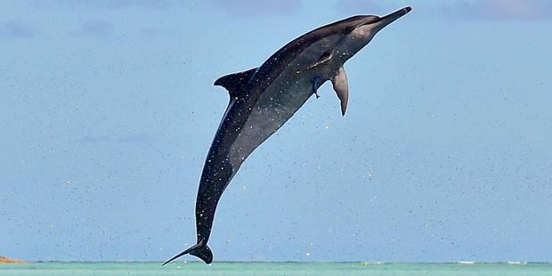 Un dauphin plonge un iPad dans l'eau et arrose la foule (VIDEO) - La DH
