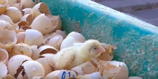 Mickey 3D sensibilise contre la maltraitance des animaux dans son dernier clip (VIDEO) - La DH