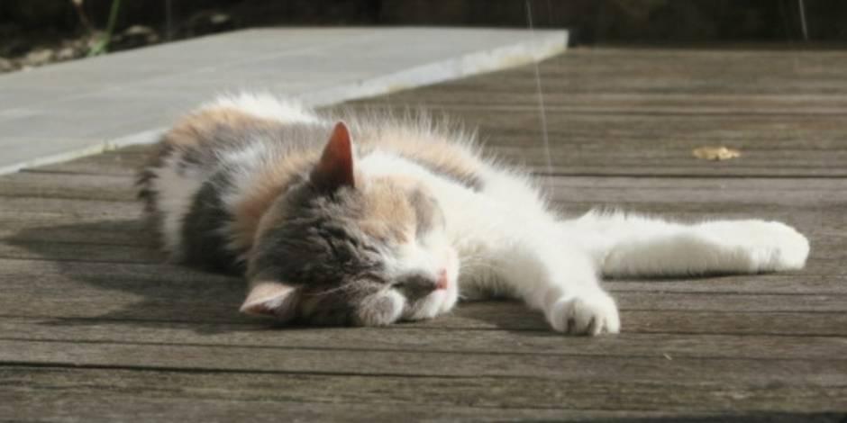 Carnets de route vers le zéro déchet : mon chat, cet anti-zéro !