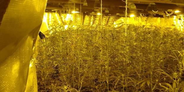 Trafic de cannabis: un Montois inculpé et placé sous mandat d'arrêt - La DH