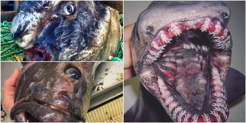 Un pêcheur russe vous présente ses horribles prises (PHOTOS)