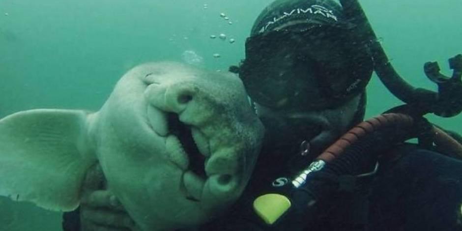 Un plongeur s'est lié d'amitié avec... un requin ! (PHOTOS)