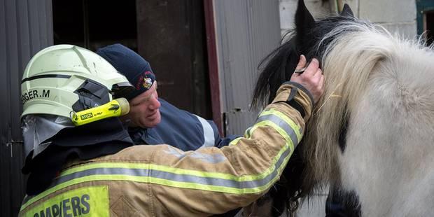 Waremme : Premier sauvetage pour l'animal rescue team - La DH