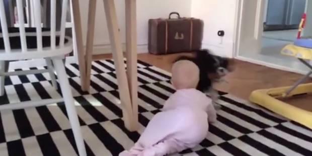 Qui est le plus rapide entre un bébé et un chien? - La DH