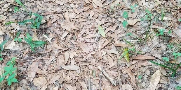 Trouverez-vous le serpent venimeux qui se cache sur cette photo? - La DH