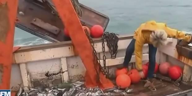 Gilbert Collard lance un poulpe sur Marine Le Pen (VIDEO) - La DH