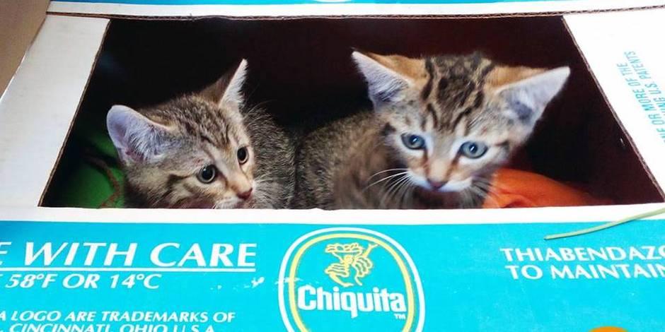 Walhain : des chatons sauvés d'une morte atroce