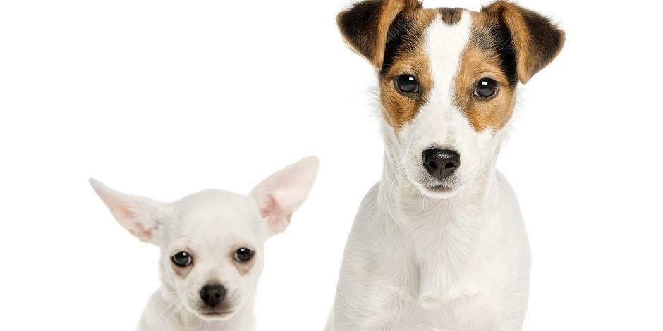 Emprunter un chien pour les vacances, c'est possible !