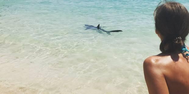 Panique à Majorque: un requin s'invite sur la plage ! (VIDEO et PHOTOS) - La DH