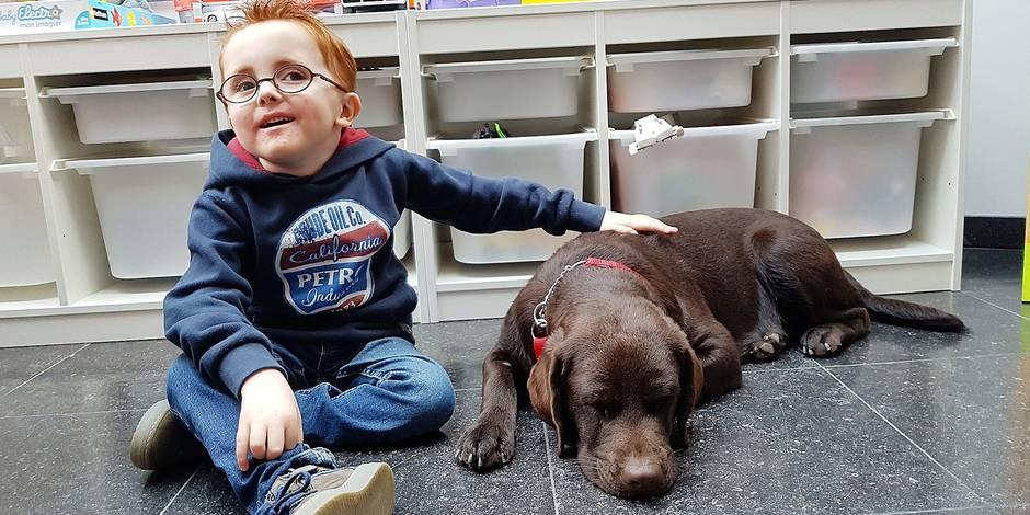 Mons : Sissi, le chien pour aveugle reconverti pour aider un enfant malade