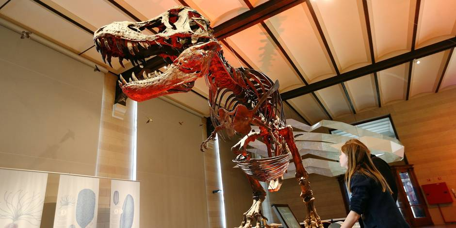 Les fossiles de dinosaures cibles des contrebandiers - La DH