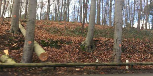 Des arbres seront abattus par ordonnance ! - La DH