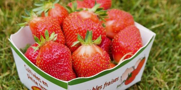 Il faut sauver la fraise de Wépion! - La DH