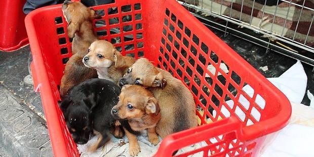 20 chiens saisis chez une dame récidiviste - La DH