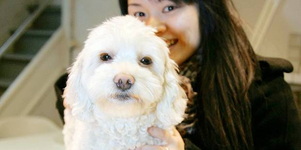 Max et Nina : prénoms canins les plus courants - La DH