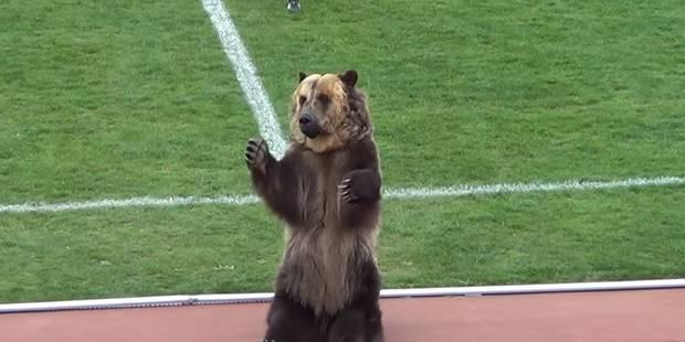 En D3 russe, le ballon du match est apporté par... un ours brun (VIDEO) - La DH