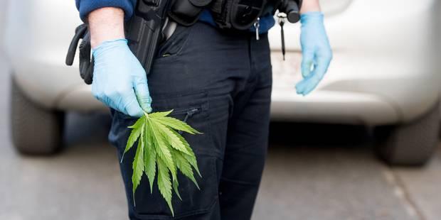 Jette : 1.307 plants de cannabis rue Léopold Ier - La DH