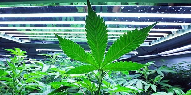 Bruxelles: 5 trafiquants de drogue plantaient en villa dans la capitale ! - La DH